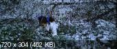 Невинность / Innocence (2004) DVDRip | AVO
