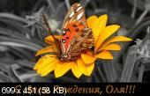 http://i69.fastpic.ru/thumb/2015/0816/0e/9cae74167a67993b2b180092e2ab140e.jpeg