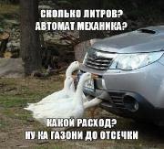 Фотоподборка '220V' 15.09.15