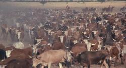 Скотоводческая компания Калпеппера (1972) BDRip-AVC by msltel