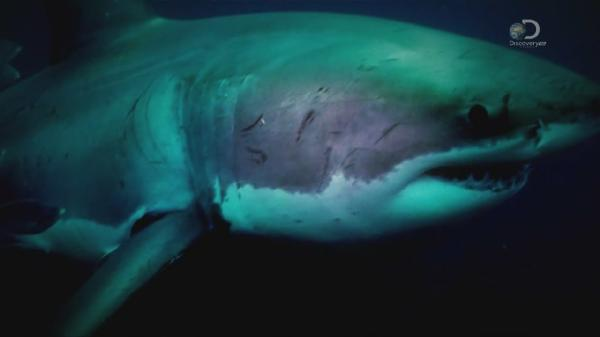 �������� ������� ����� / Great White Appetite (2015)